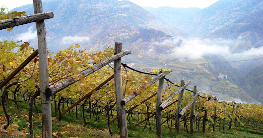 Is Alto Adige a pointless wine region?