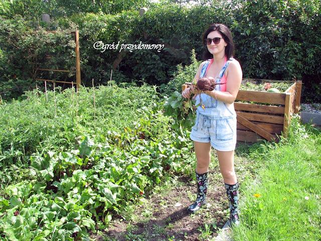 zielsko w warzywniku, ogród przydomowy