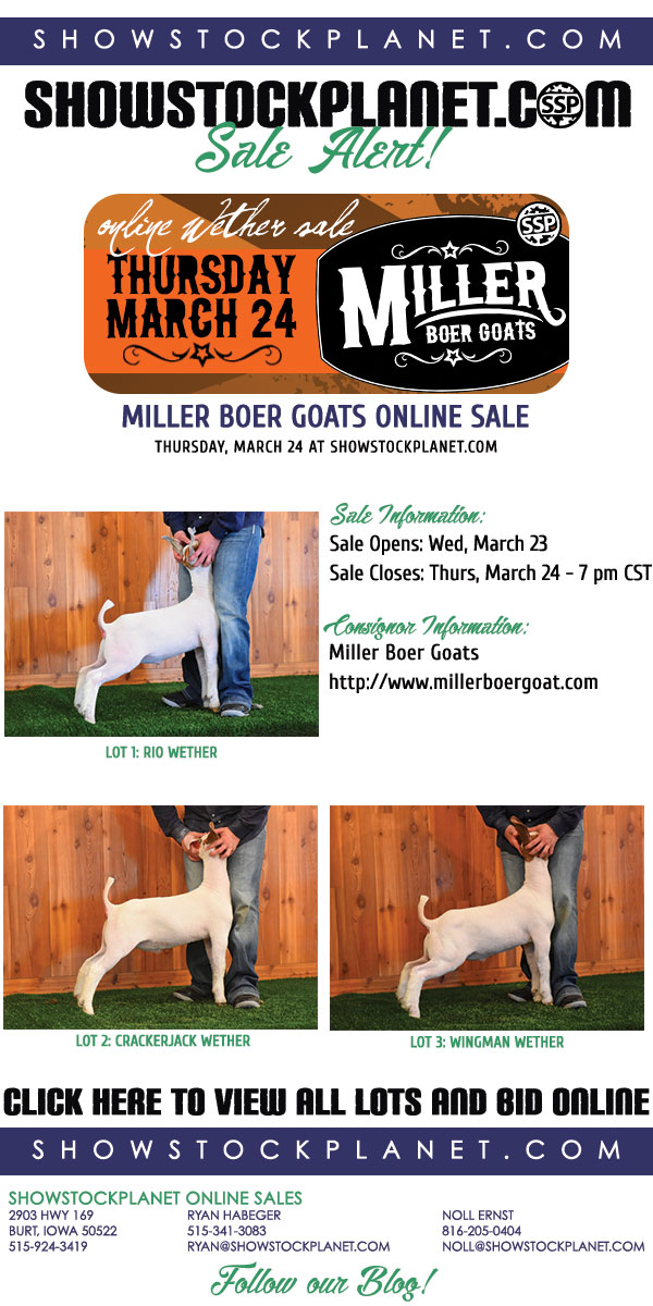 ShowStockPlanet: Get YOUR Goat Tonight! Miller Boer Goats Online