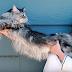 Rekora Koşmuş 5 Kedi