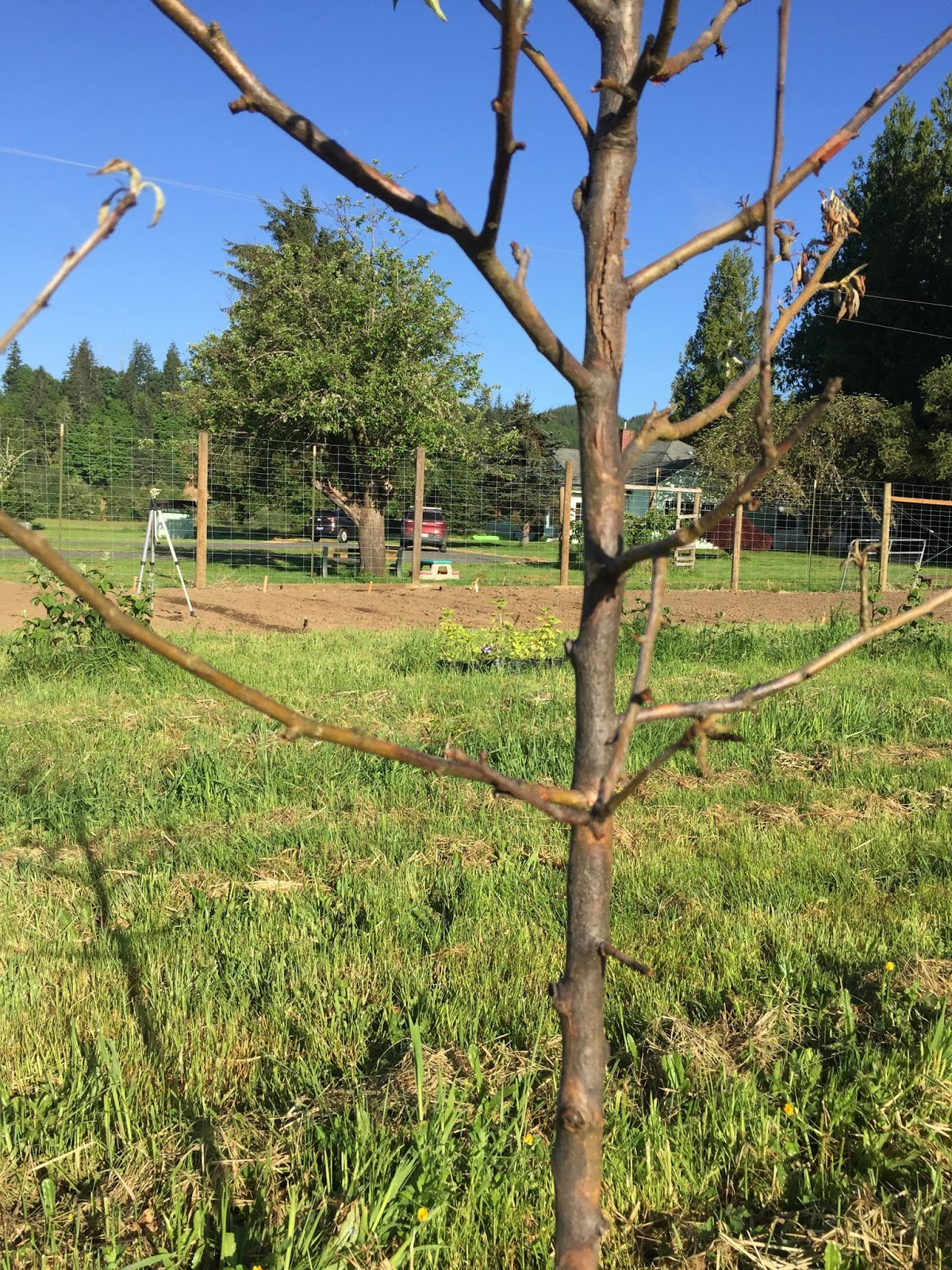 Clatsop County Master Gardeners Association May 2017
