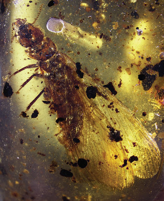 Ants were socializing – and sparring – nearly 100 million years ago