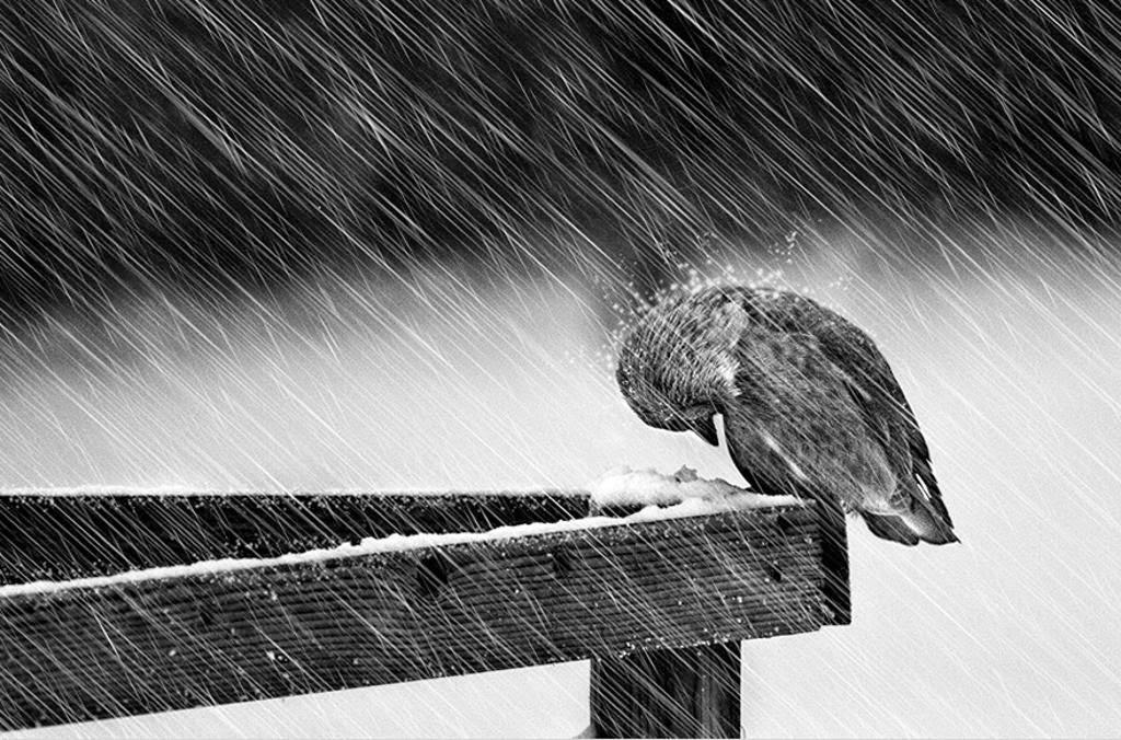 Ave en la nieve