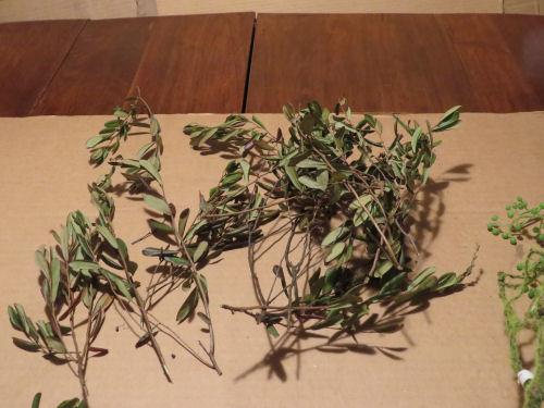 leatherleaf twigs