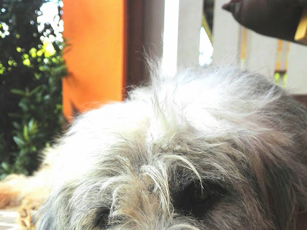 More Moula more problem - elämää traumanjälkeisestä stressireaktiosta kärsivän adoptiokoiran kanssa