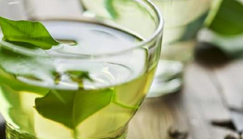 25 Manfaat Teh Hijau Sebagai Minuman Kesehatan Herbal