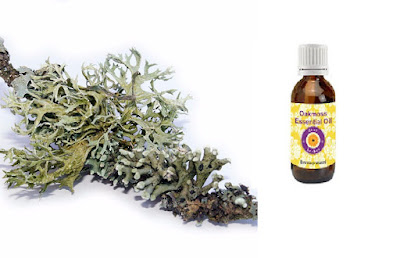 Health Benefits Of Oak Moss Essential Oil