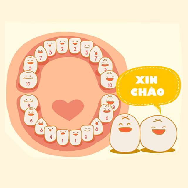 Các bà mẹ nên quan tâm thứ tự mọc răng của bé