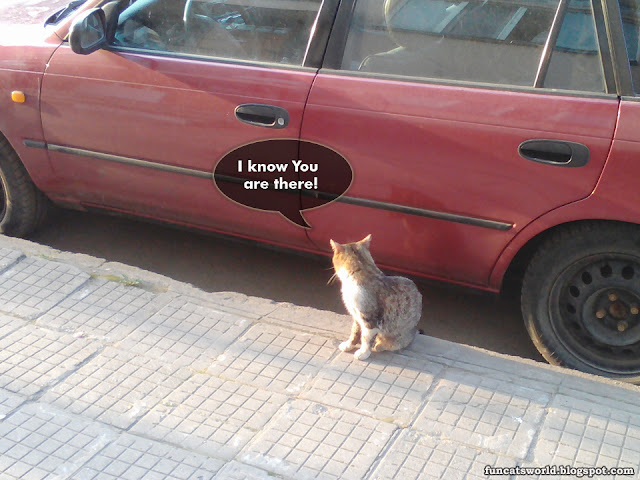 Cat Knowing