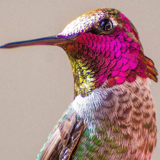 Sinek Kuşu Hakkında Bilgi