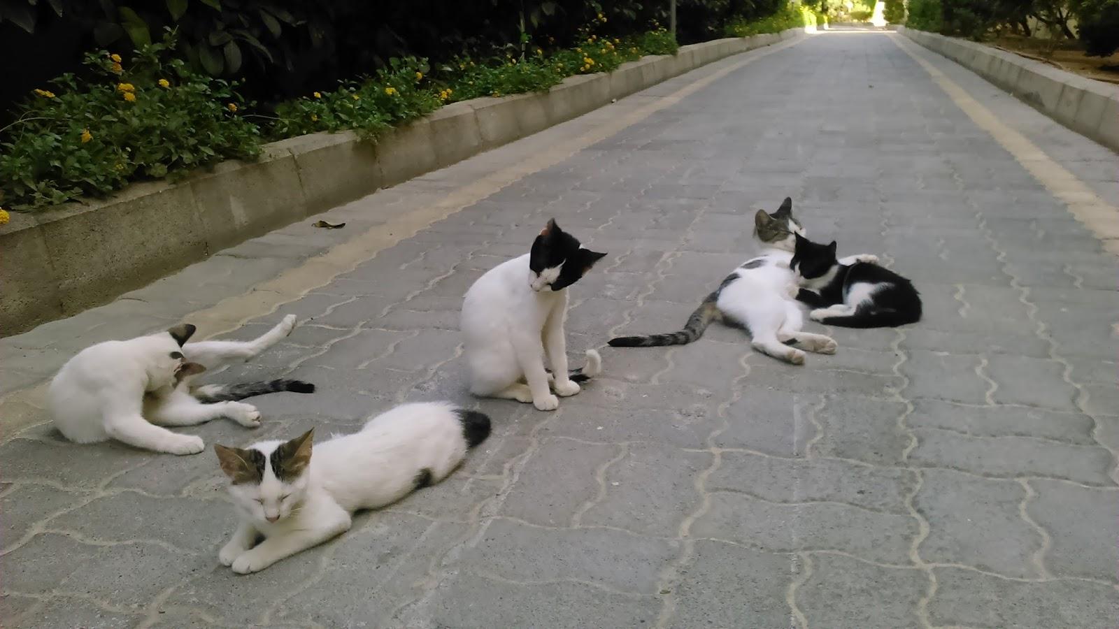 Běloch miluje černou kočičku