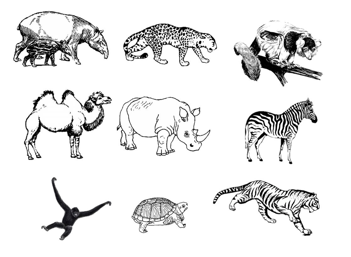 It is a picture of Dashing Drawing Zoo Animals