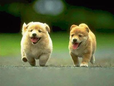 Tẩy giun cho chó xong ai cũng mong muốn chú chó của mình sống khỏe mạnh