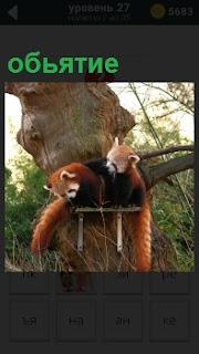 На полочке прибитой к дереву сидят два симпатичных зверька в обьятиях друг друга