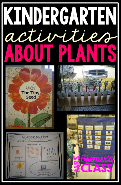 Lots of fun ideas and hands on activities for students to learn about plants. Includes planting seeds and recording observations! Perfect for a spring theme. K-1 #kindergarten #1stgrade #science #plants #plantunit #spring