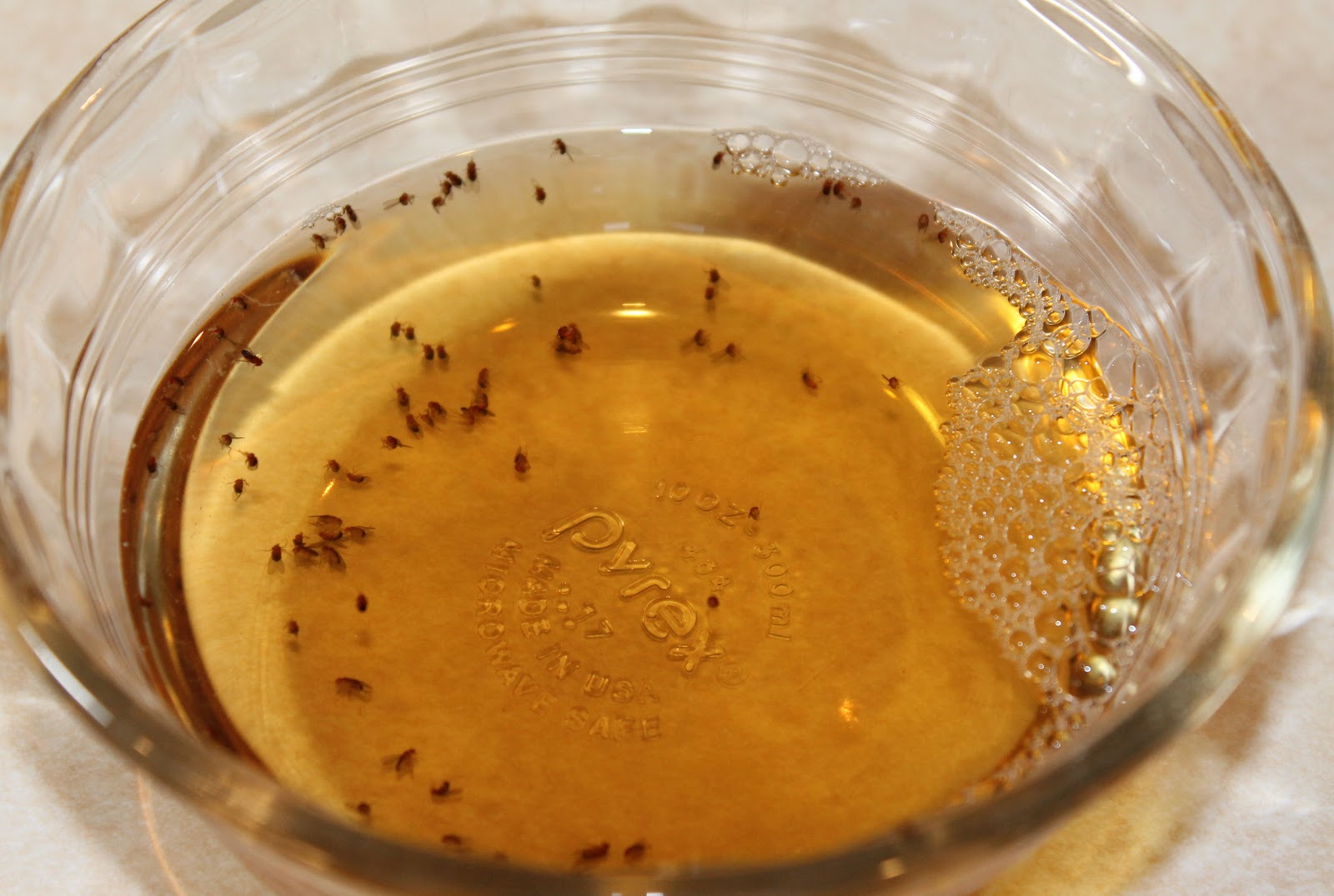 tiny gnats in the house and how to get rid of them  - Page 3