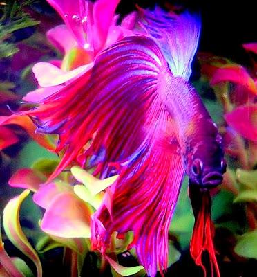 ikan hidupan bernilai di dalam air