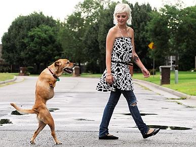faith cachorrinha que anda em duas patas ambiente de leitura carlos romero