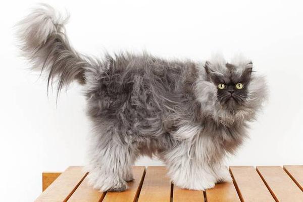 """3 con mèo nổi như diều gặp gió nhờ bộ mặt lúc nào cũng """"cáu bẳn"""""""