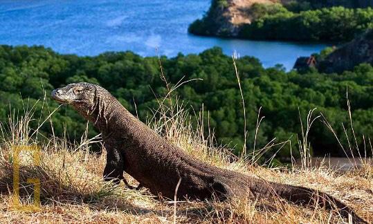 Persebaran Hewan (Fauna) di Muka Bumi