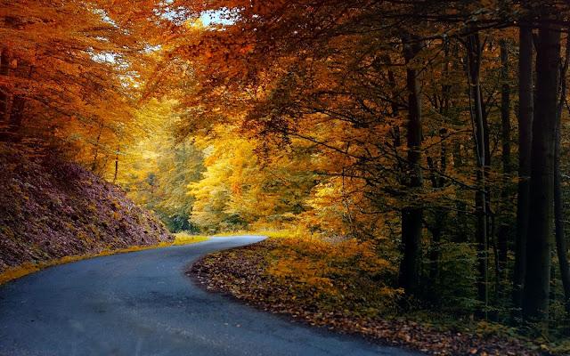 Herfst achtergrond met weg door bos