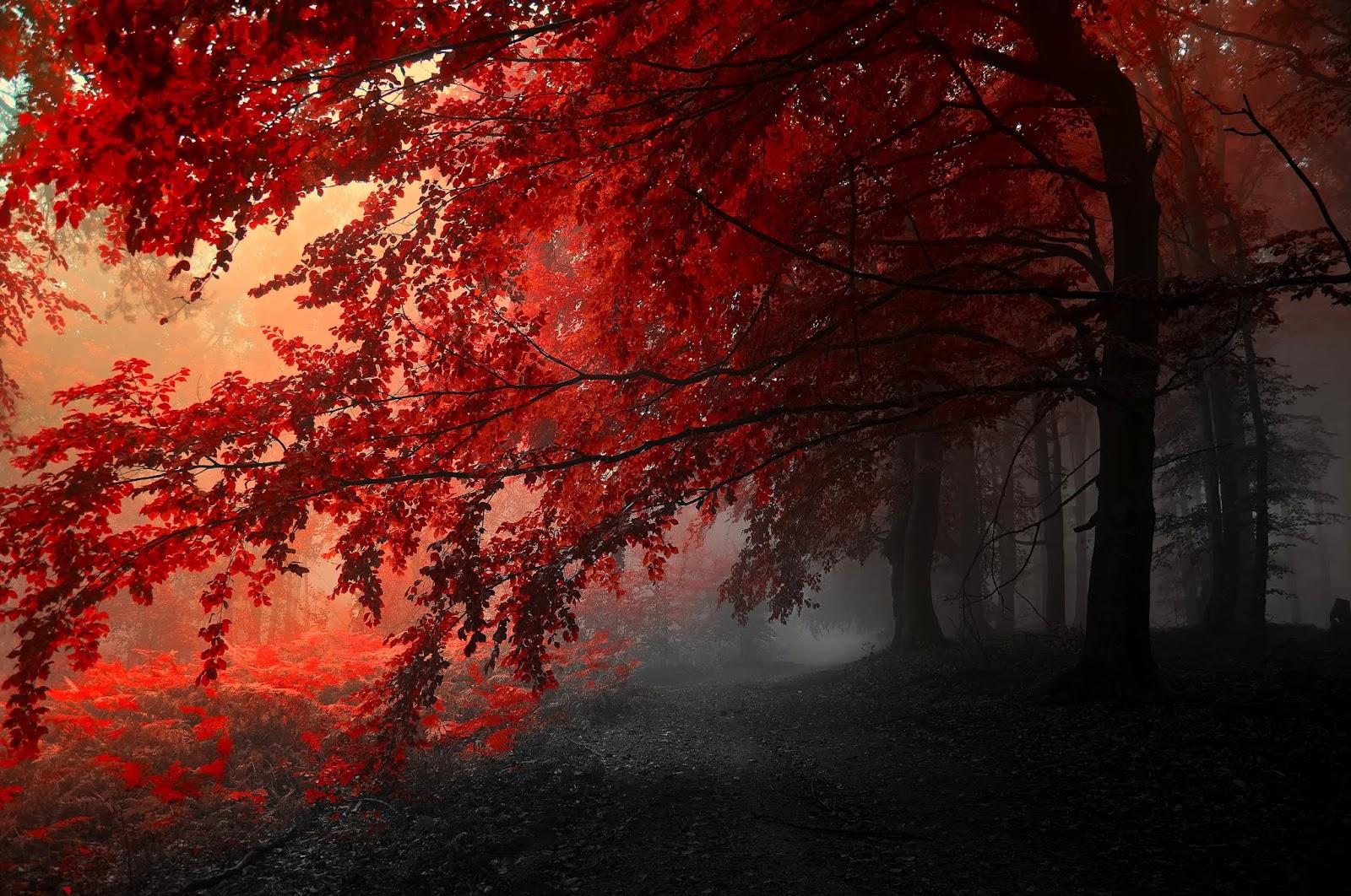 Siyah-Kırmızı Efektli Ağaç Wallpaper