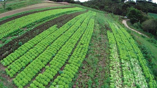 Prefeitura de Colombo compra diretamente dos agricultores gerando renda para o produtor do município