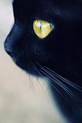 fotos geniales con animales