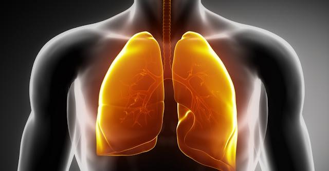 Pulmones y circulacion menor