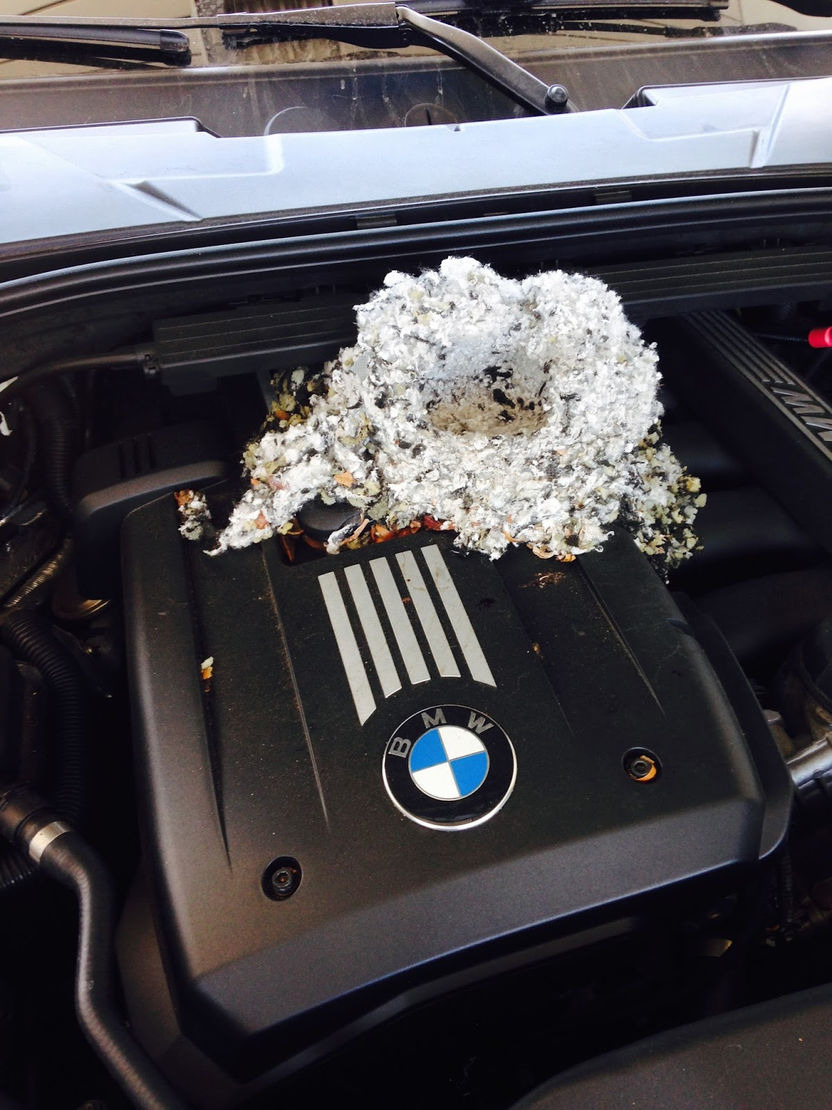 beware of soy wiring in your car the rats ruined my bmw engine again [ 1200 x 1600 Pixel ]