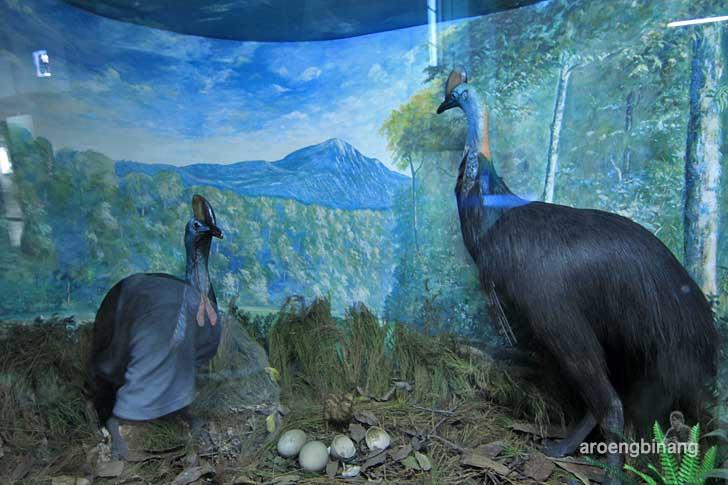 kasuari museum zoologi bogor