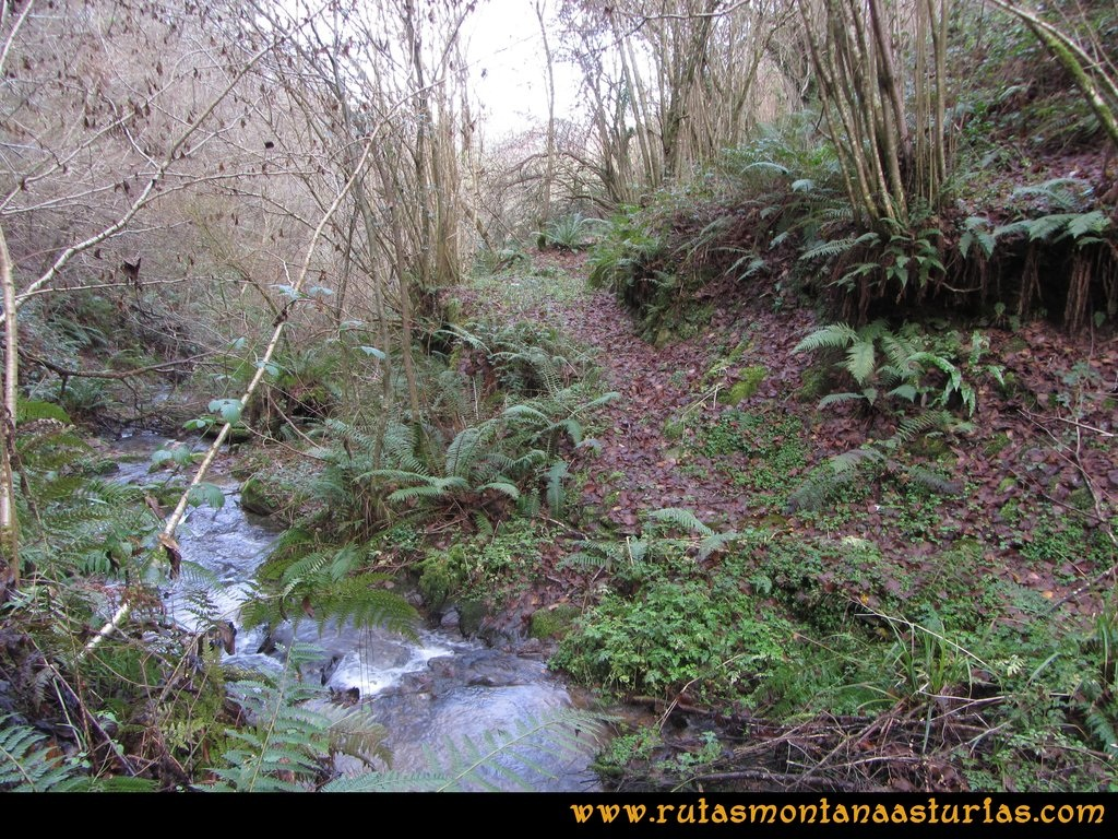 Senda de Bustavil, Tineo, PR AS-288: Arroyo de Soriegos.