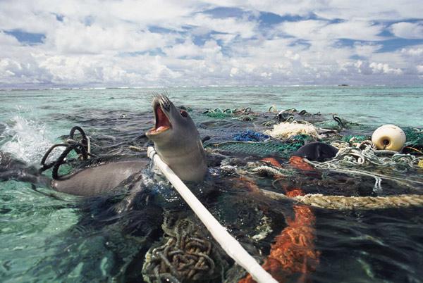 اضرار البلاستيك على البيئة البحرية  تاثير البلاستيك على الانسان  اضرار البلاستيك على الماء  اضرار الاكياس البلاستيكية على البيئة  اضرار البلاستيك على النباتات الخضراء  اضرار البلاستيك ويكيبيديا  تأثير البلاستيك على البيئة pdf  اضرار العمل في مصانع البلاستيك