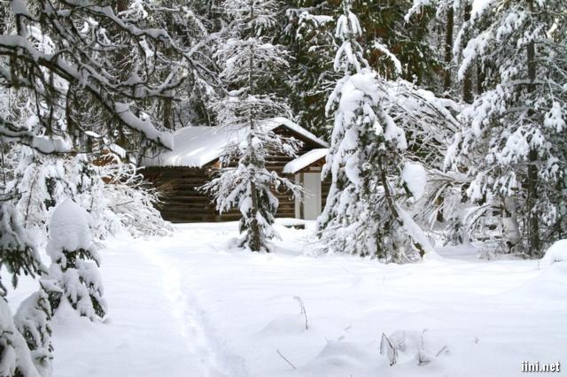 ảnh nhà và hàng cây thông phủ đầy tuyết