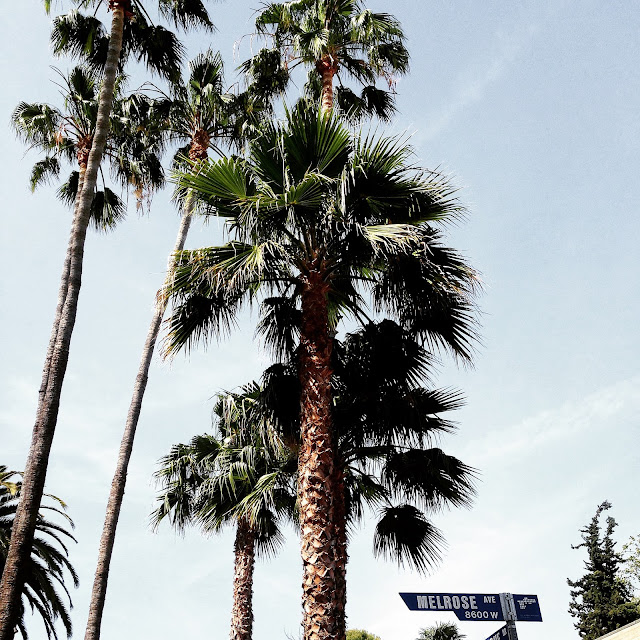 Melrose Avenue Los Angeles Palm Trees