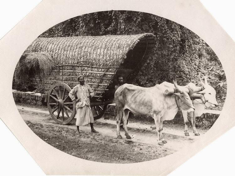 Indian Bullock Drawn Cart - c1880's