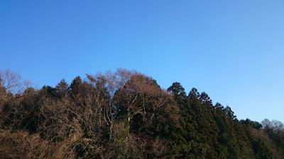 谷津の林と青空