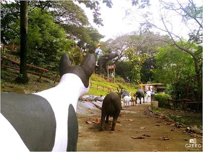 Philippine Animals
