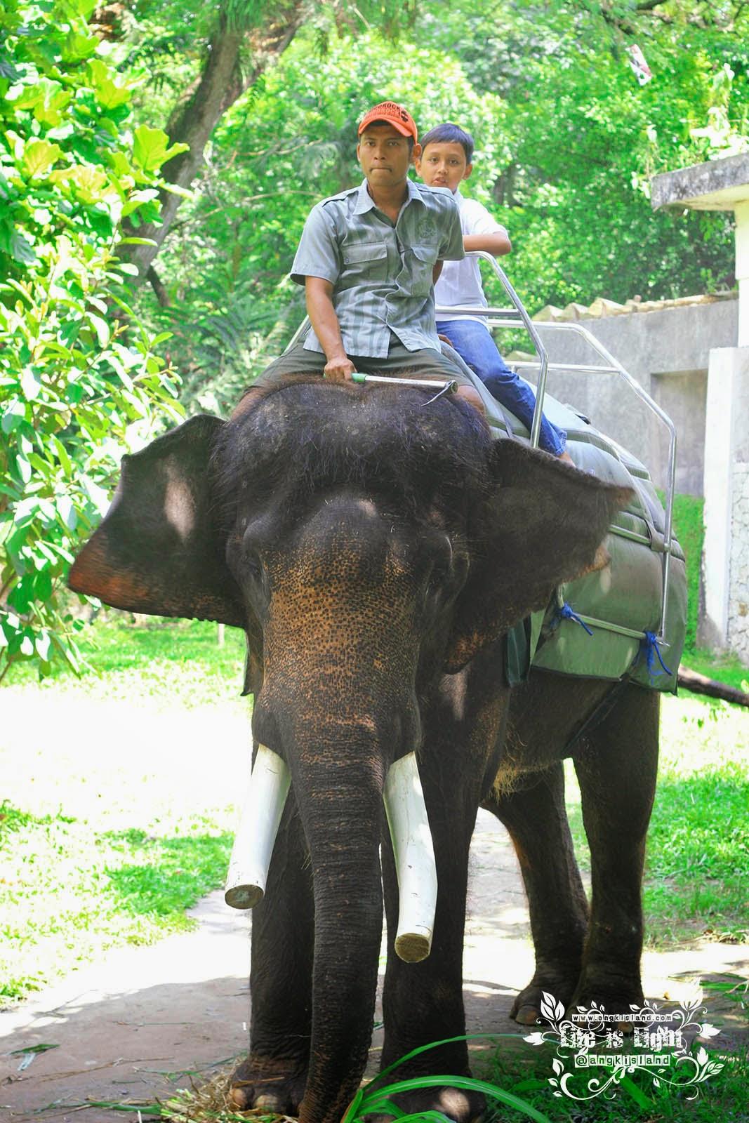 pawang gajah Gembiraloka