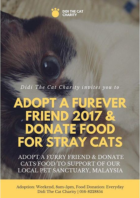DIDI THE CAT CHARITY | LETS DONATE FOOD FOR STRAY CATS