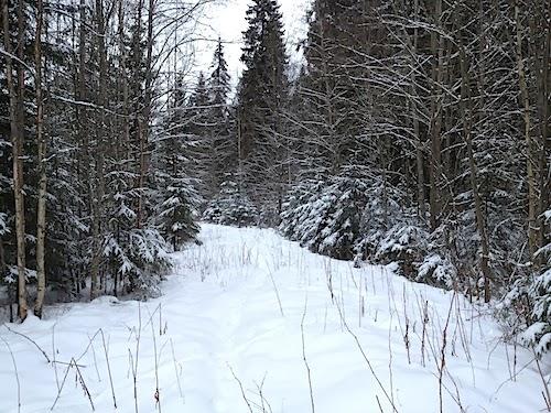 Jyväskylä: Rainer-kuusi ja Ladun Maja