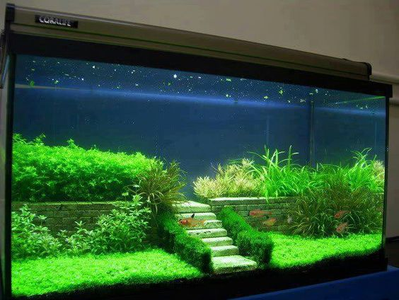 Easy And Beautyfull Aquascape With Aquarium Plants, Source Pinterest