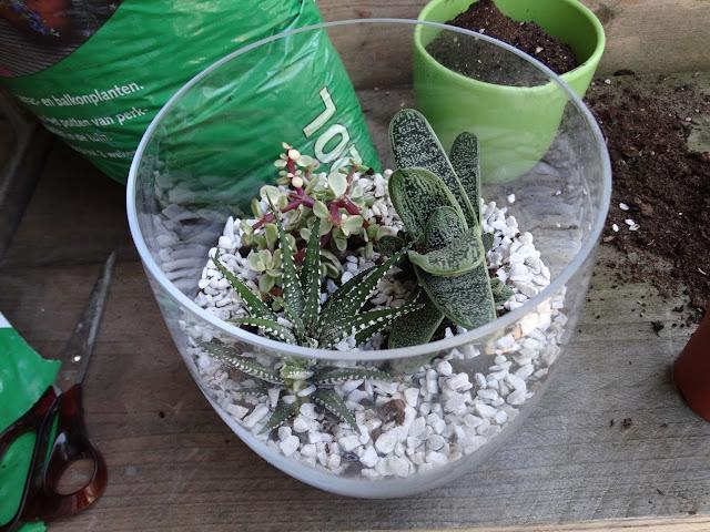 terrarium vaas vetplantjes