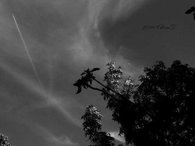 A very small half of moon behind the clouds...and a silhouette of plane up in the sky at afternoon. O foarte mică jumătate de lună în spatele norilor ... și o siluetă de avion pe cer, la amiază.
