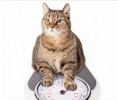 Cat weight graphical