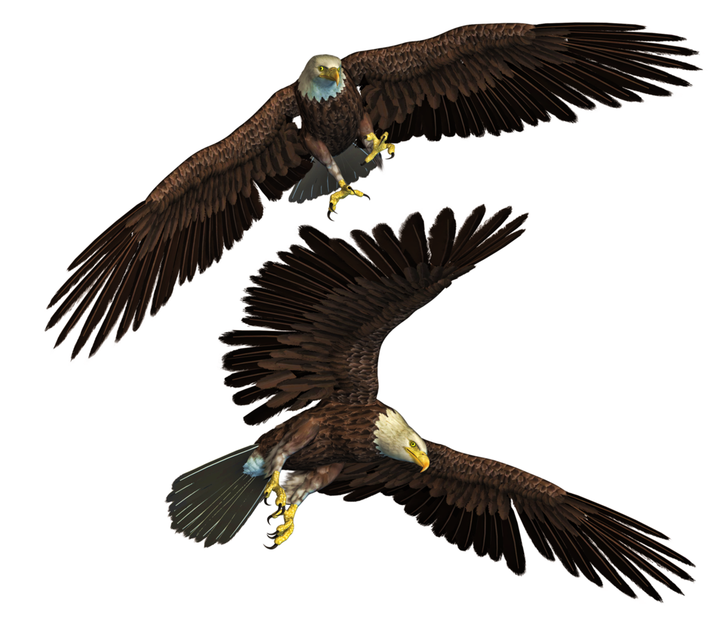 Eagle Png Stock Free For Photoshop Manipulation By Edit