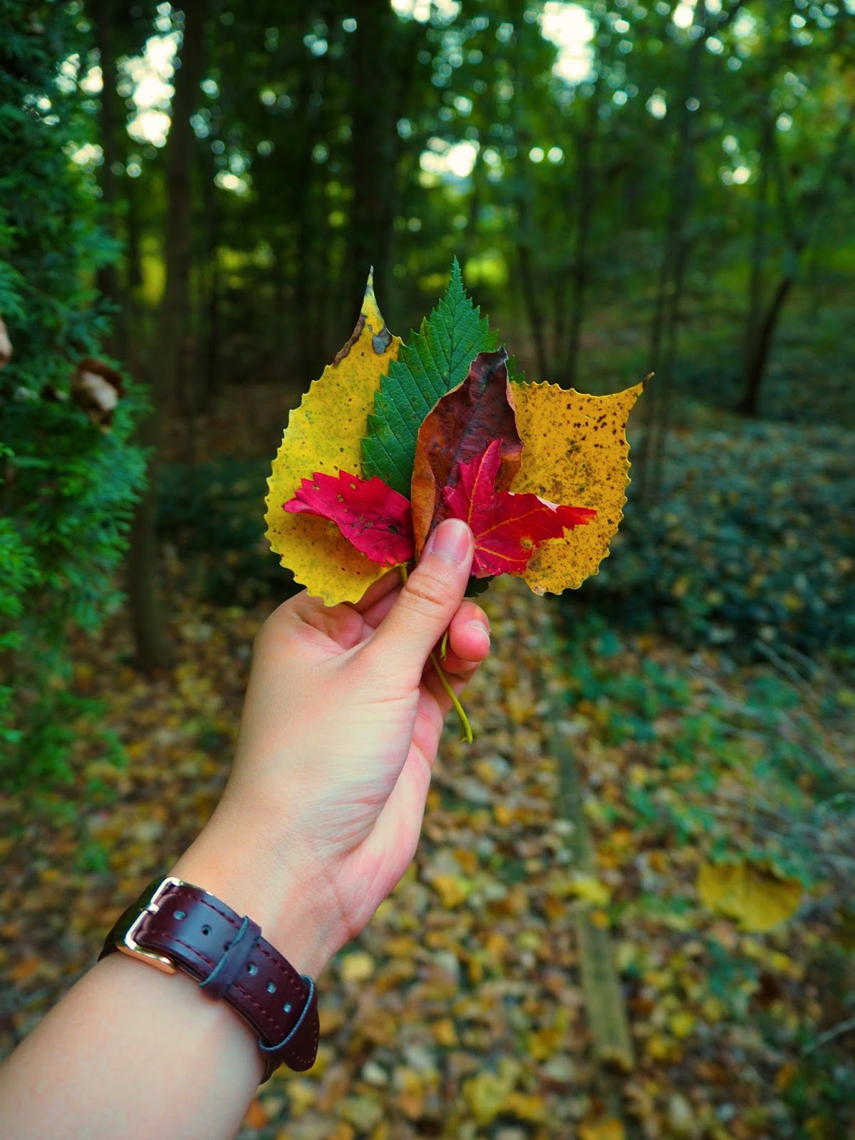 colorful leaves in the autumn or fall time