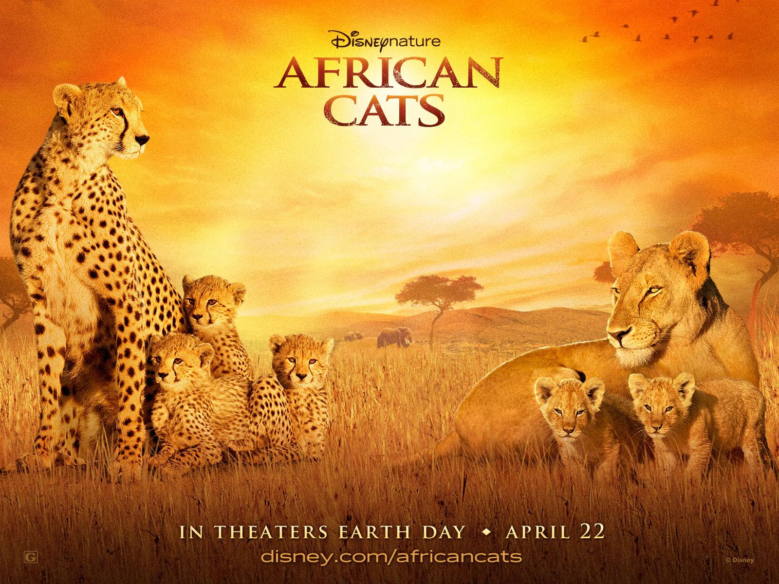 https://2.bp.blogspot.com/-tuS6hzx-Rgw/TaccaA_MqHI/AAAAAAAAAbQ/w0XtozWwWY4/s1600/African-Cats-Wallpapers-1600x1200.jpg