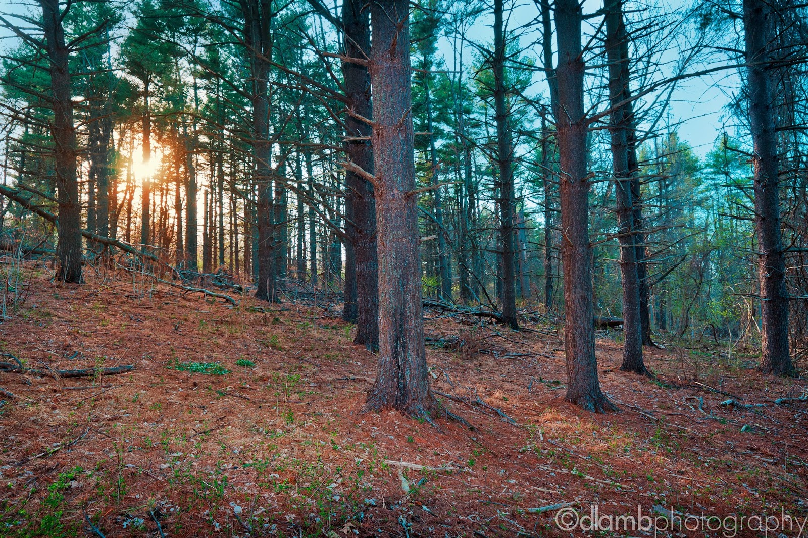 http://david-lamb.artistwebsites.com/featured/spring-sunshine-at-fort-washington-state-park-david-lamb.html