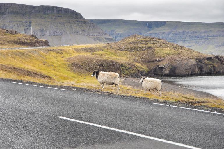 Vacances en Islande - road trip sur l'île
